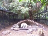 koala_sanctuary_brisbane148