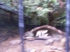 koala_sanctuary_brisbane149