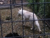 koala_sanctuary_brisbane152