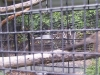 koala_sanctuary_brisbane157