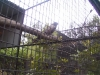 koala_sanctuary_brisbane158