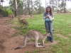 koala_sanctuary_brisbane164