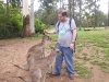 koala_sanctuary_brisbane167