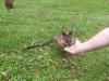koala_sanctuary_brisbane171