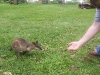 koala_sanctuary_brisbane173