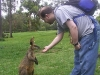 koala_sanctuary_brisbane177