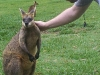 koala_sanctuary_brisbane179