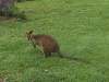 koala_sanctuary_brisbane181