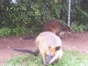 koala_sanctuary_brisbane187