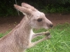 koala_sanctuary_brisbane193