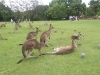 koala_sanctuary_brisbane201