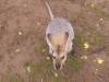 koala_sanctuary_brisbane204