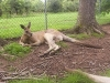 koala_sanctuary_brisbane206