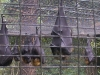 koala_sanctuary_brisbane260