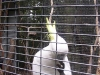 koala_sanctuary_brisbane263