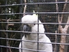 koala_sanctuary_brisbane265