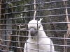 koala_sanctuary_brisbane266