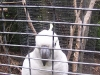 koala_sanctuary_brisbane267