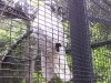 koala_sanctuary_brisbane271