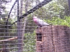 koala_sanctuary_brisbane272