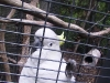 koala_sanctuary_brisbane282