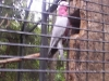 koala_sanctuary_brisbane284