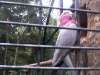 koala_sanctuary_brisbane285
