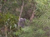 koala_sanctuary_brisbane332