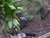 koala_sanctuary_brisbane333