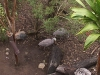 koala_sanctuary_brisbane334