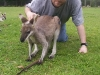 koala_sanctuary_brisbane353