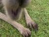 koala_sanctuary_brisbane377