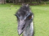 koala_sanctuary_brisbane383