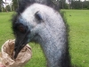 koala_sanctuary_brisbane394