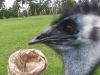 koala_sanctuary_brisbane399