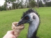 koala_sanctuary_brisbane402