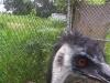 koala_sanctuary_brisbane444