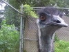 koala_sanctuary_brisbane447