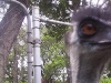 koala_sanctuary_brisbane449