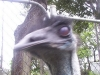 koala_sanctuary_brisbane453