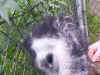 koala_sanctuary_brisbane458