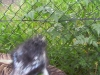 koala_sanctuary_brisbane460