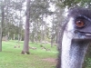 koala_sanctuary_brisbane465