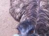 koala_sanctuary_brisbane471