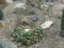 brisbane_mt_cootha_botanical_garden