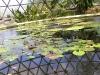 mt-cootha-botanical-gardens09