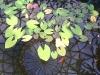 mt-cootha-botanical-gardens10