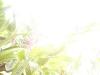 mt-cootha-botanical-gardens13
