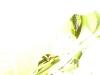 mt-cootha-botanical-gardens15