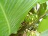 mt-cootha-botanical-gardens16